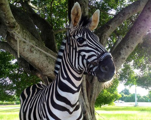 NGALA Living-Art Animals