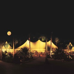 Ngala at Night