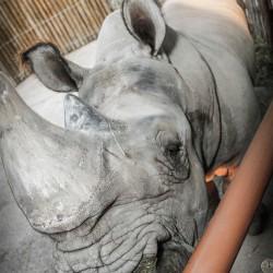 NGALA® Living-Art Animal Encounter