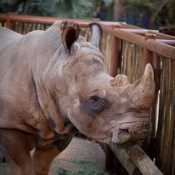 NGALA Living-Art Animal Encounters